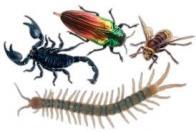 Imagem de artrópode