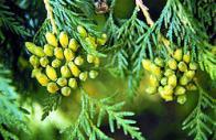 árvore-da-vida