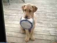 Cachorro brocado