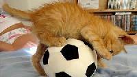 bola-gato ball cat