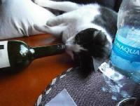 bêbada