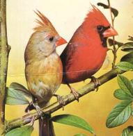 cardeal-vermelho