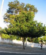 caneleiro