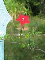 campainha-vermelha
