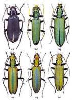 Imagem de coleópteros