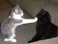 Conversa com minha mão ai, mané!