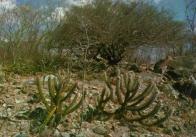 Imagem de caatinga