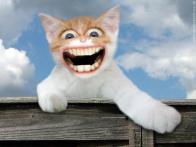 Gato desvairado
