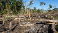 Desmatamento nítido da floresta amazônia