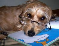 estudioso