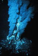 estremófito