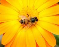 Imagem de entomofilia