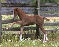 Filho de uma égua.