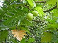 fruta-p�o