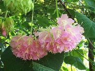 flor-de-abelha