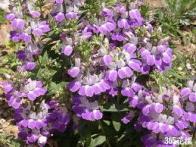 flor-boreal