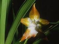 flor-de-couro
