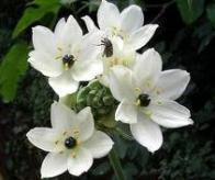 flor-de-contas