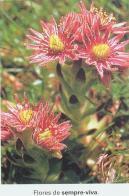 flor-de-palha