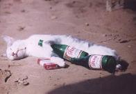 O verdadeiro gato pingado