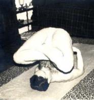 iogue