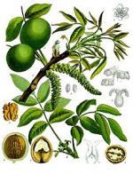 jugland�ceas