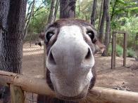 Longe pra burro