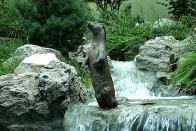 Imagem de lontra-comum