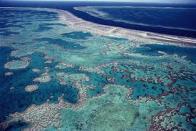 mar de coral