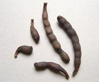 pimenta-da-áfrica