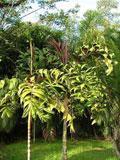 palmeira-sari