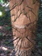 palmeira-arara
