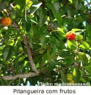 Imagem de pitanga