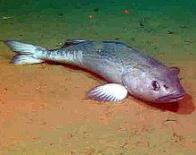 Imagem de peixe-carvão