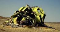 Imagem de polvo-do-deserto