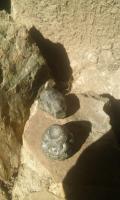 pedra-de-corisco