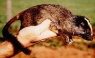 Imagem de rato-cor�