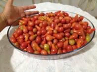 Imagem de tomate-cabacinha