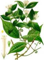 Imagem de uva-da-serra