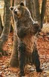urs�deos